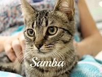 Samba's story The adoption fee is $85.00 with an
