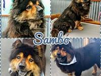 Sambo's story You can fill out an adoption application