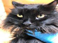 SAMBUCA's story Hello my name is Sambuca! I am new to