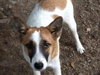 Sammie's story Young cattle dog mix Sammie was born in