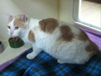 Sammie's story Sammie is a 5 year old Domestic