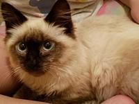 Sammie's story I'm a young siamese mix. I was turned