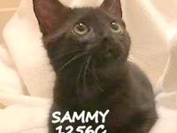 I am a sweet little kitten. My mommy and I escaped a