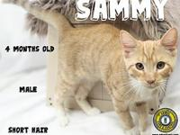Sammy's story You can fill out an adoption application