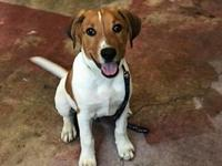 Sammy (GAPR/Fostered in TN)'s story Angels Among Us