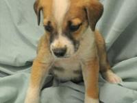 Sammy's story Sammy is one of 7 pups that came in with