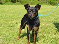 Sammy is a super cutie 1 year old Terrier mix, weighing
