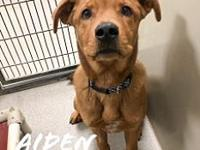 Sammy 116411's story Aiden is a 1 yr old chow/lab mix .