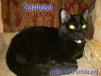 Samosa's story You can fill out an adoption application