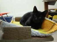 Sampson's story I'm a playful kitten who loves to have