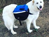 Sampson's story Sampson is a 2 yr old Great Pyrenees.