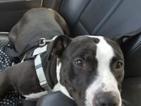 Sampson is a neutered male, around 5 years old and 50