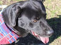 My story Hi, my name is Samson and I am 4 years old!