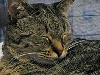 Samuel Catson's story All of our adoptable pets are