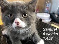 Samuel's story Our pets are spayed/neutered and current