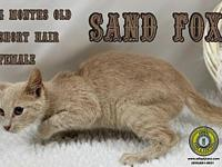 Sand Fox's story You can fill out an adoption