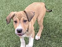 Sandal Litter- Chaco's story Meet Chaco! This boy is a
