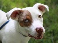 Sandler's story This dog is in Tennessee. Adoption