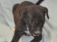Sandra's story Sandra is one of 7 pups that came in