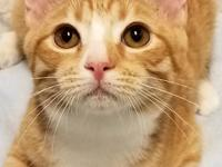 Sandy and his siblings were rescued from the shelter,