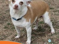 Sandy is a super cute girl that loves attention. She is