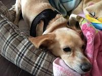 Sandy's story Meet Sandy ia gentle dog with a loving