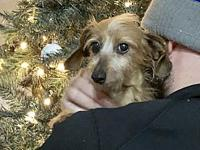 Sandy's story Sandy came from a puppy mill case. She is