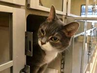SANDY's story BASIC CAT INFORMATION: Child Rating: