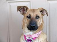 Sandy's story Do you want to adopt me?  Just go to