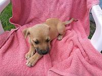 Sandy's story Sandy is a cute little girl, she and her