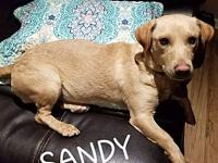 Sandy's story Sandy is a sweet 2 year old lab mix. She