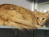 Sandy Paws's story Primary Color: Orange Tabby Weight: