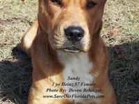 Sandy was scheduled to be killed on Friday 13 January