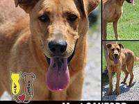 SANFORD's story MEET PINEY! A 2 year old, male,