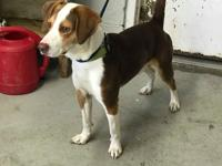 Sangria is a male beagle mix found as a stray on Heil
