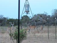 Amazing 184.35 acres of hunting and tranquil living,