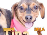 Dachshund Rescue of Los Angeles Adoptions Sun August 16