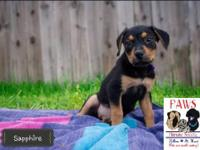 Sapphire is a 2 month old Rottweiler/Pit Bull mix. She