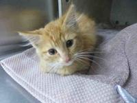My story Sarabi is a sweet 4 month old kitten who came
