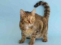 SARAFINA's story SARAFINA IS A GREAT KITTY LOOKING FOR