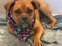 Sarah is a 7 month old spayed female Boxer. Sadly, she