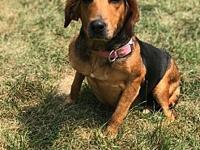 Sarah's story Sweet girl looking for a family to call