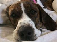 Sasha (hound)'s story Sasha is in a foster home. We