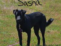 Sasha's story Sasha is a lovable playful puppy in