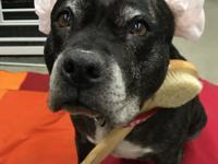 Our senior Sasha is a wonderful mellow girl. She loves