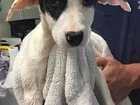 Saska's story Sweet little puppy was rescued with her