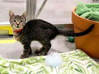 My story Come visit me at the Orlando Cat Cafe! I'm