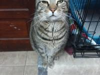 Sassy is a very friendly, outgoing cat who loves