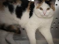 My story Sassy is shy at first but sweet and playful