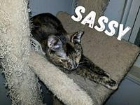 Sassy's story Sweet Sassy is a beautiful girl who was